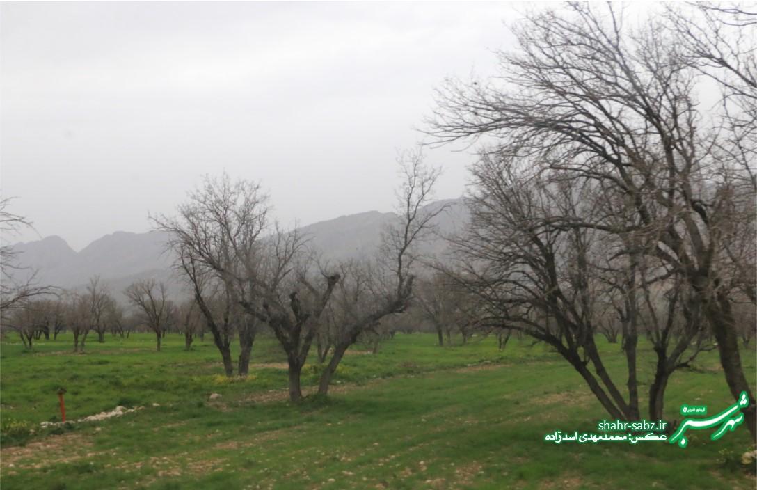دشت برم/ طبیعت در نبرد پایانی زمستان/ عکس: محمدمهدی اسدزاده